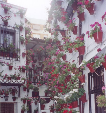 Dozens, If Not Hundreds, Of Plants Hanging From The Walls Of A Córdoba Patio