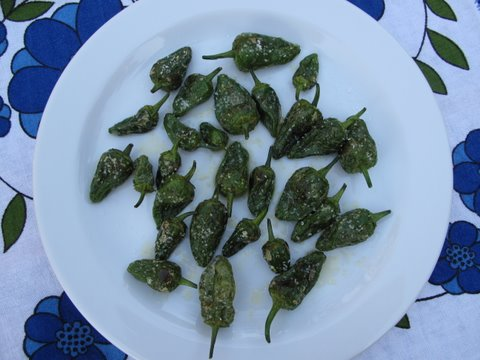 a tapa of pimientos de Padrón, quick fried in olive oil and sprinkled with salt