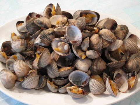 a dish of steamed cockles, berberechos al vapor