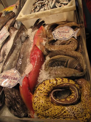 local varieties of fish at a seafood market in Las Palmas