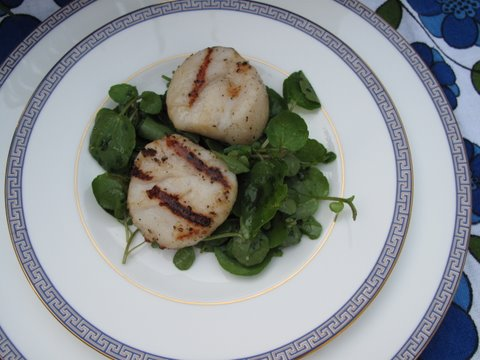 grilled scallops with watercress salad, vieiras a la barbacoa con berros