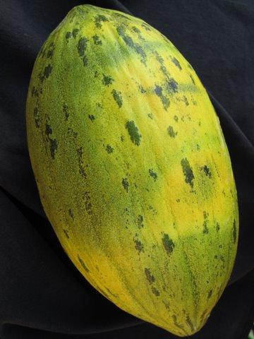 a piel de sapo melon