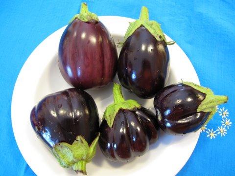 Berenjenitas, small eggplants from the garden